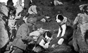Il trasporto di rifornimenti di munizioni per prime linee veniva spesso affidato a cani di grossa taglia dotati di apposite tasche da trasporto